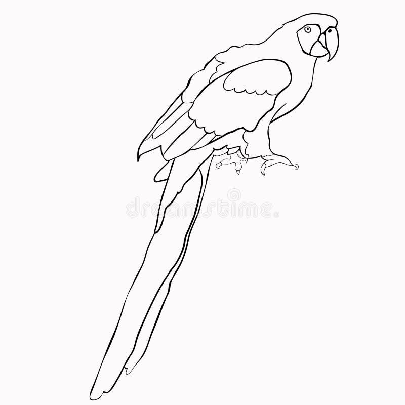 加勒比鹦鹉开会着色  也corel凹道例证向量 向量例证