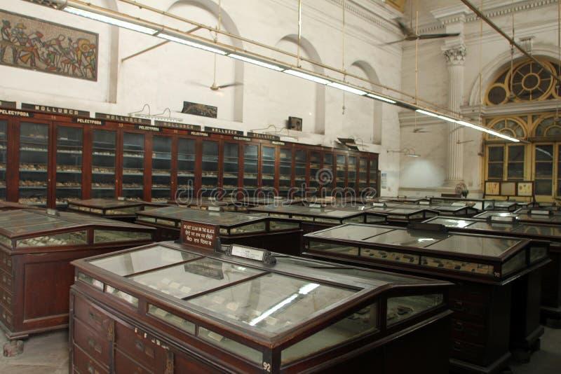 加尔各答印地安博物馆  免版税库存照片