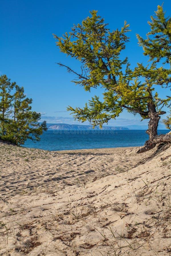 贝加尔湖海岛湖olkhon俄国 库存图片