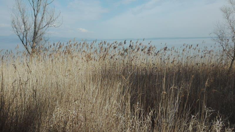 加尔达湖 免版税图库摄影