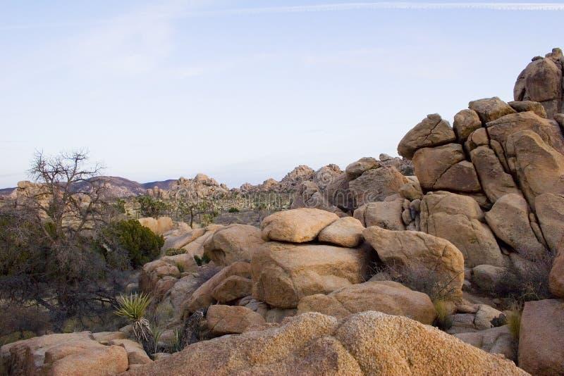 加州约书亚夏天结构树 库存图片