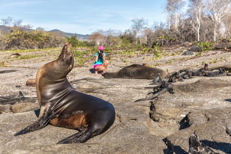 加拉帕戈斯海狮和野生生物自然在加拉帕戈斯群岛上的摄影师游人 图库摄影