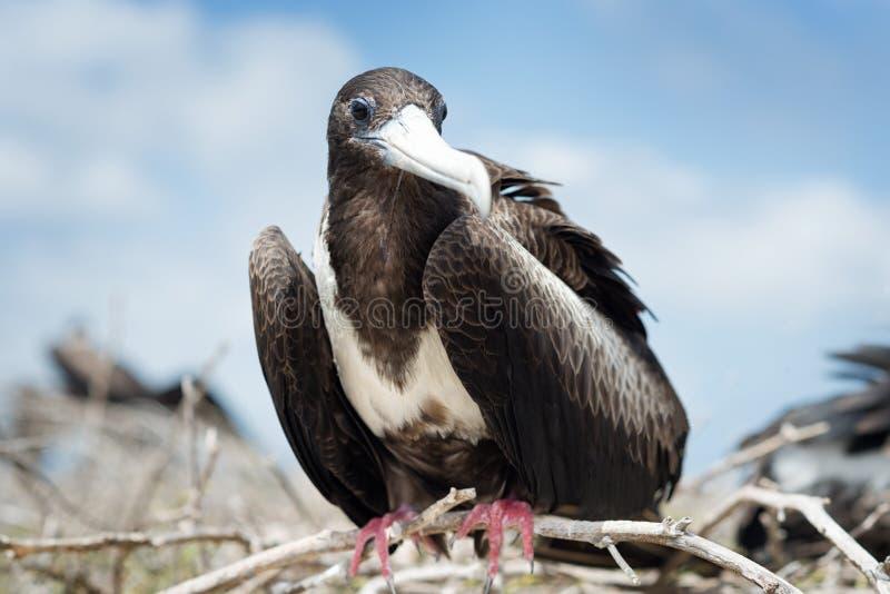 加拉帕戈斯群岛 免版税库存照片