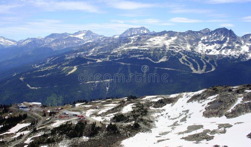 加拿大山吹口哨 库存照片