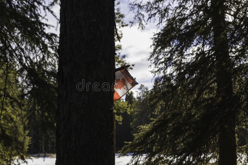 加拿大旗子在班夫 库存图片