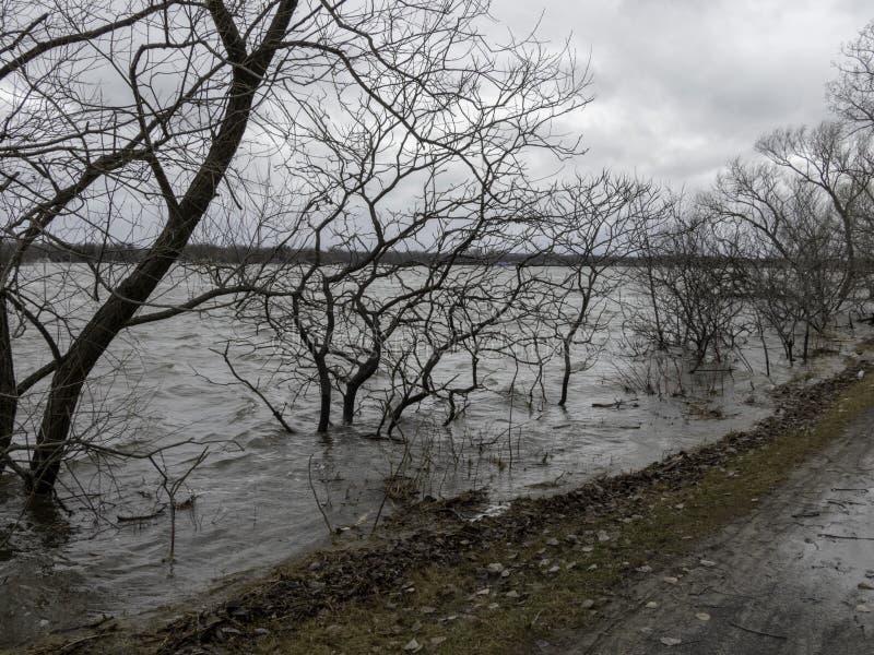 加拿大渥太华市水边裸树和自行车道的美丽景色 库存图片