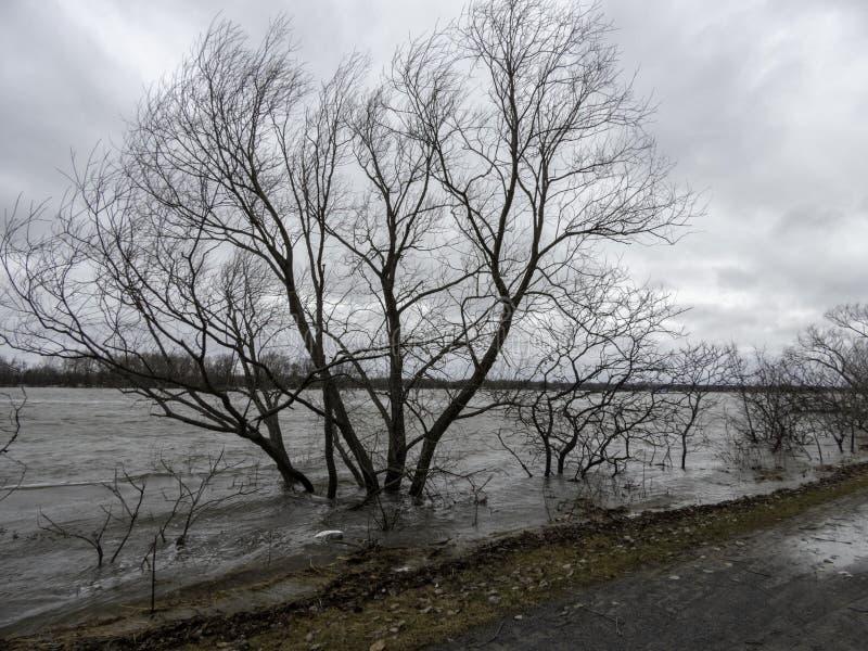 加拿大渥太华市水边裸树和自行车道的美丽景色 图库摄影