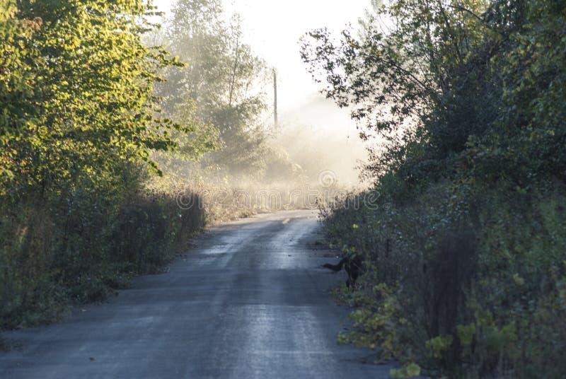 加拿大渥太华附近多尔曼岭路区树木环绕的美丽路景 库存图片