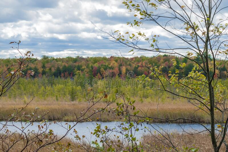 加拿大渥太华附近的Mer Bleu Bog区,湖边被干草环绕的美丽景色 库存照片