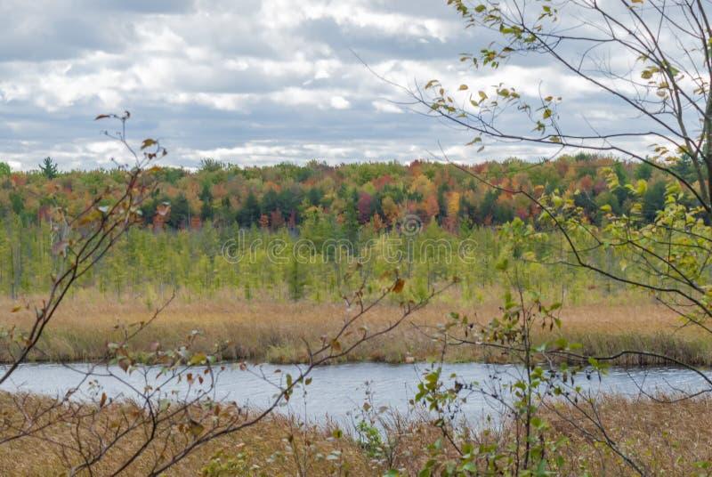 加拿大渥太华附近的Mer Bleu Bog区,湖边被干草环绕的美丽景色 库存图片