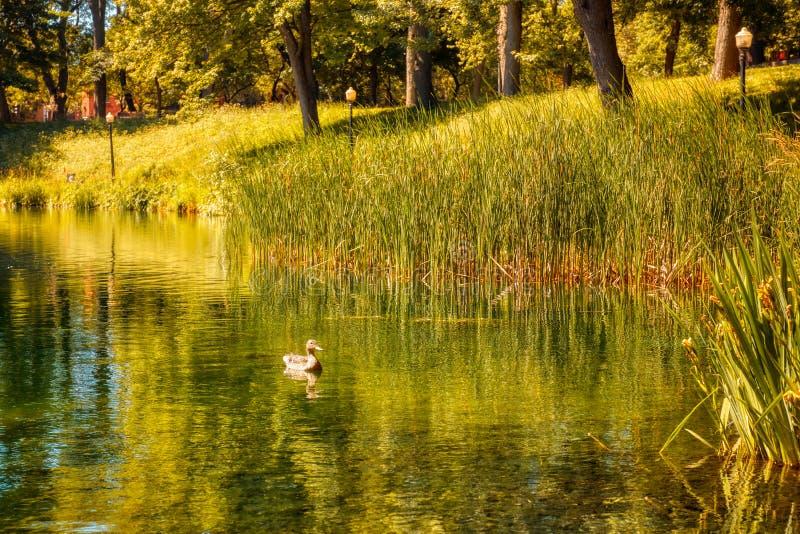 加拿大蒙特利尔La Fontaine公园的池塘、绿草和树木 库存图片