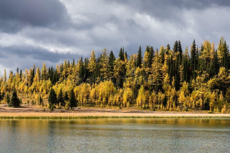 加拿大`的s班夫国家公园阳光草甸 库存图片