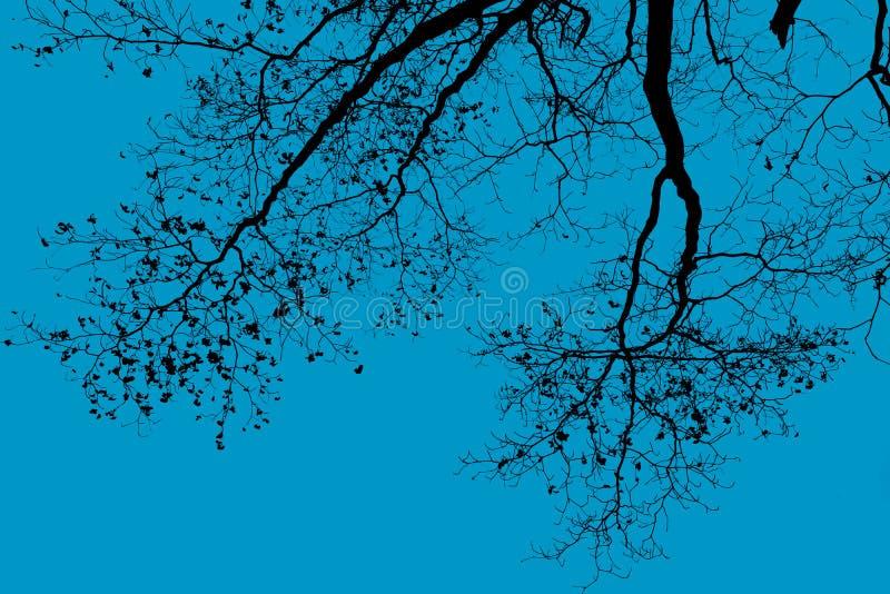 更加早期的有雾的早晨剪影结构树 库存照片