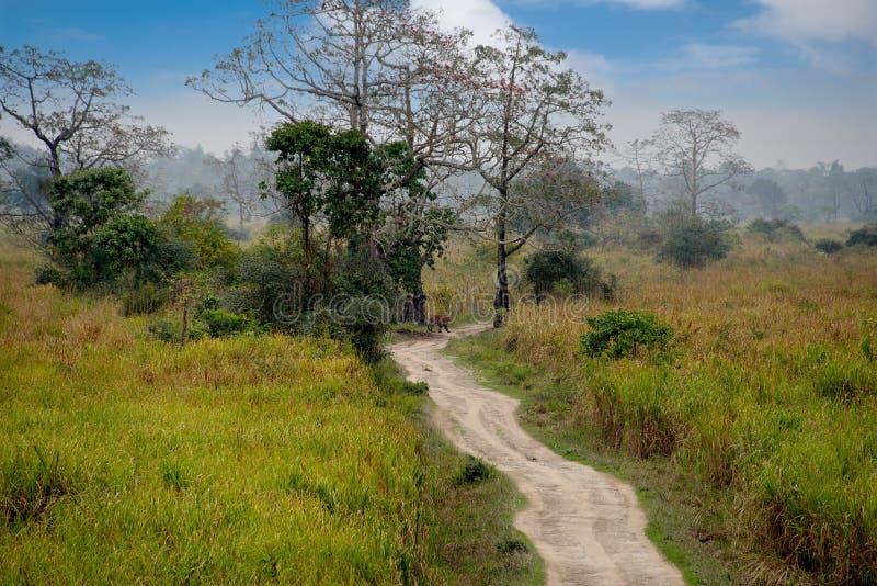 加济兰加国家公园居民  底格里斯河 库存图片