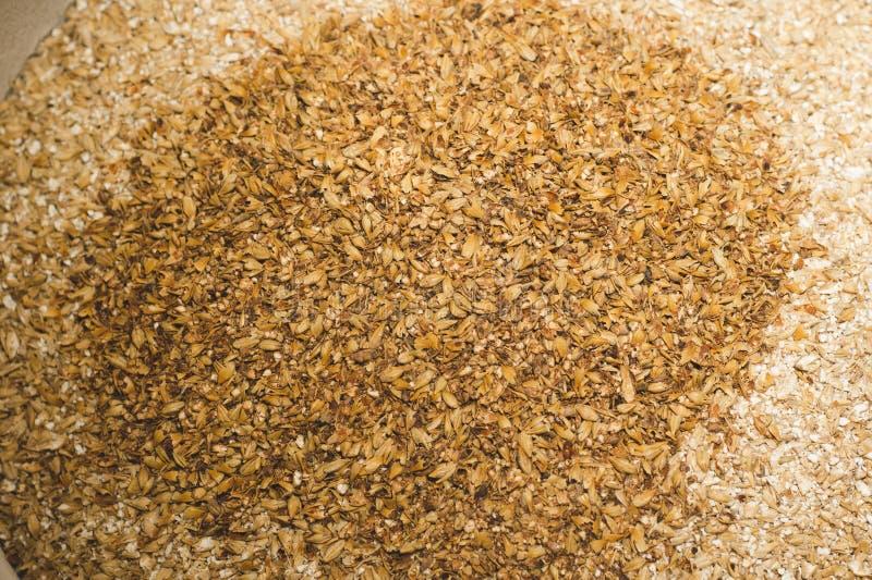 加淡麦芽的焦糖麦芽 一种用大麦淡麦芽酿造工艺啤酒 啤酒或啤酒来自皮尔斯纳麦芽 免版税图库摄影