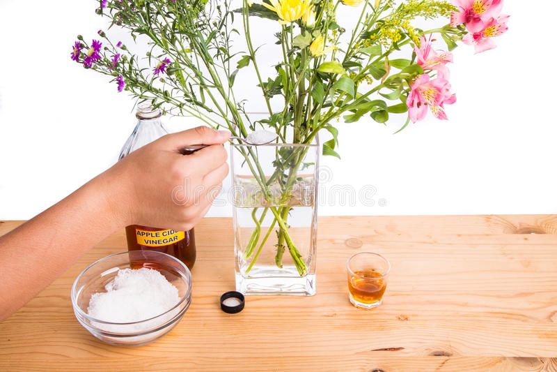 加苹果汁醋和糖保持花更加新鲜 免版税库存照片