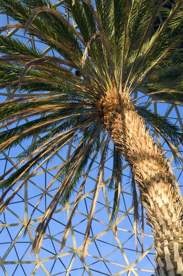 加那利群岛在音乐学院的枣椰子结构树 免版税图库摄影