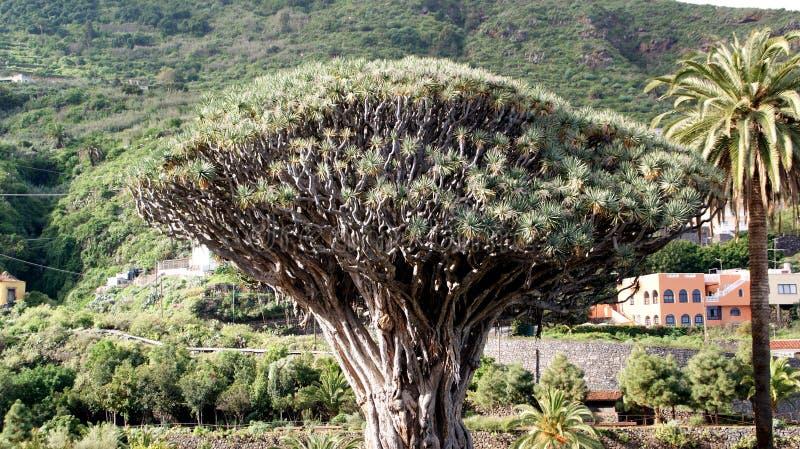 加那利群岛西班牙tenerife 免版税库存图片