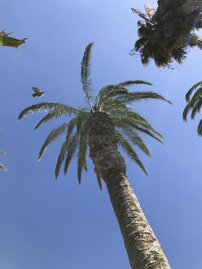 加那利群岛 库存图片