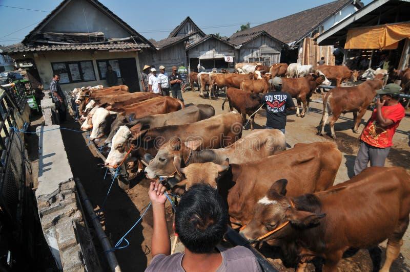 活动在传统母牛市场上在Eid Al的准备Adha时在印度尼西亚 免版税库存照片