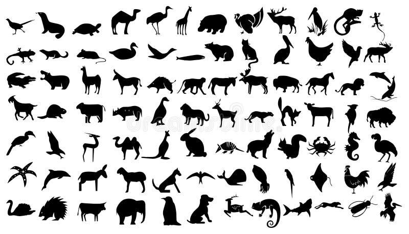 动物关系了象集合 库存例证