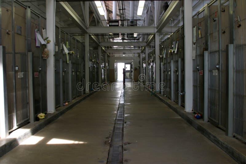 动物关进笼子在风雨棚陈列里面的走廊 免版税图库摄影