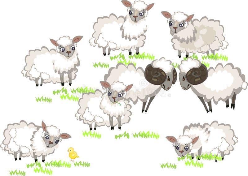 动物农场横向许多sheeeps夏天 库存例证