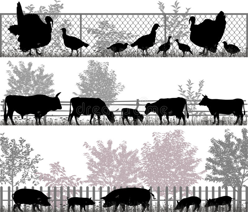 动物农场横向许多sheeeps夏天 向量例证