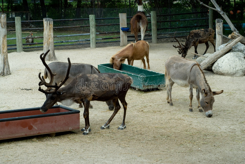 动物动物园 库存照片