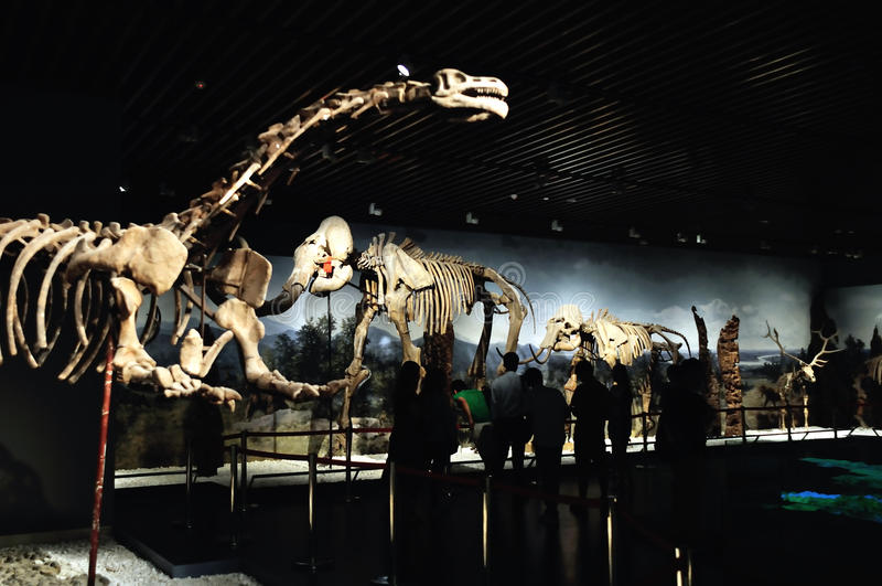 动物化石 库存图片