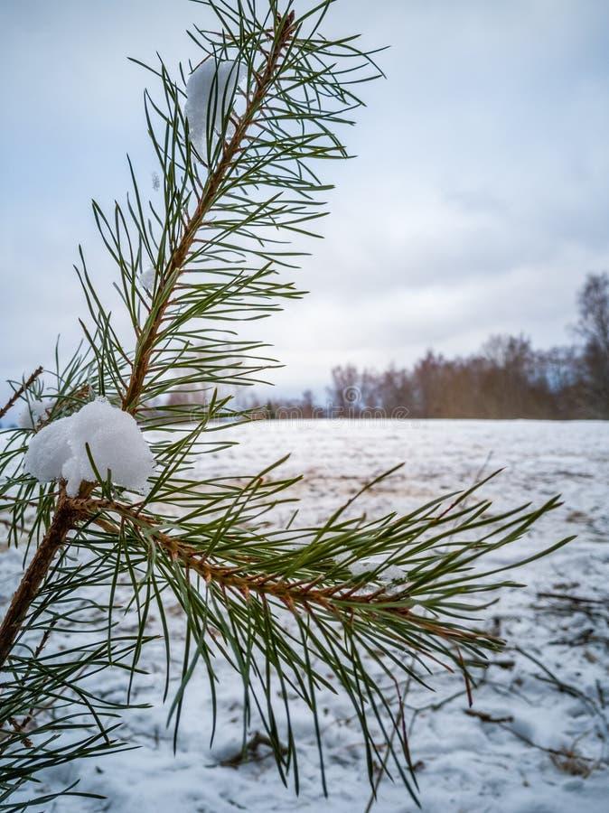 动物区系特写镜头细节在森林在与报道地面,抽象背景的雪的多云冬日 免版税图库摄影