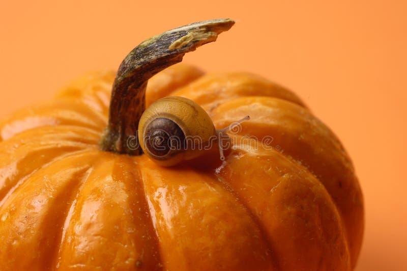 动物南瓜蜗牛 库存照片