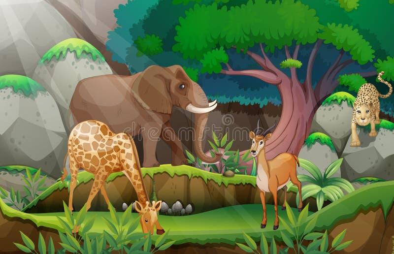 动物和密林 库存例证