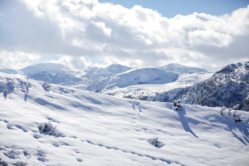 动物和阴影踪影在雪 野生动物弯曲的踪影在雪的 在雪的踪影留下不由人 免版税图库摄影