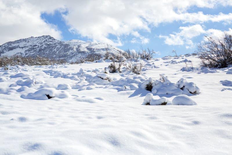 动物和阴影踪影在雪 野生动物弯曲的踪影在雪的 在雪的踪影留下不由人 免版税库存照片