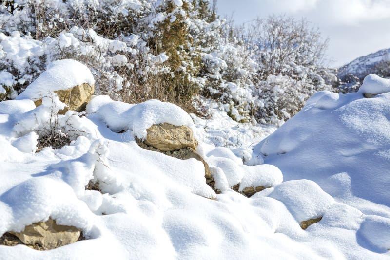 动物和阴影踪影在雪 野生动物弯曲的踪影在雪的 免版税库存图片