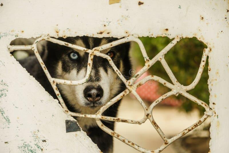 动物多壳的狗面孔特写镜头 逗人喜爱的美丽的宠物画象 图库摄影