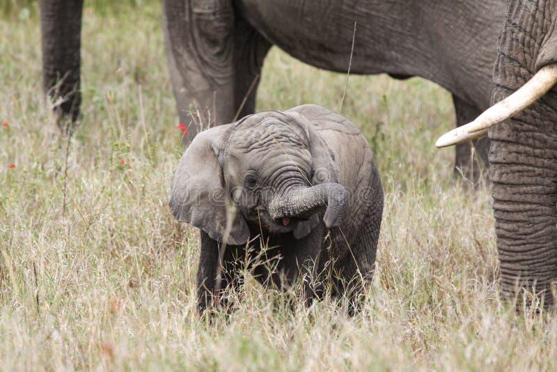 动物婴孩吃 免版税图库摄影