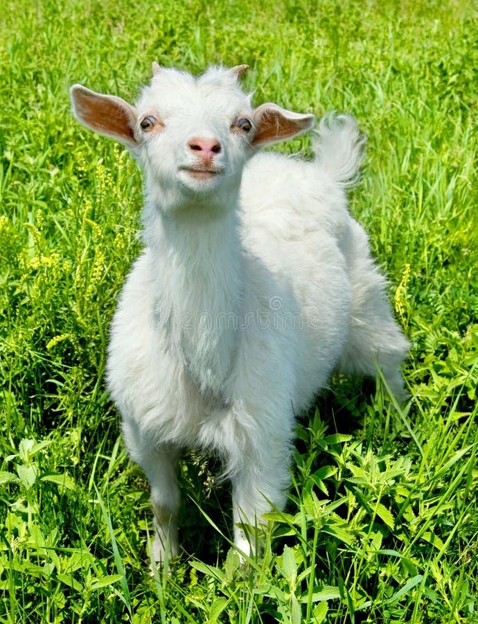 动物孩子 免版税库存照片