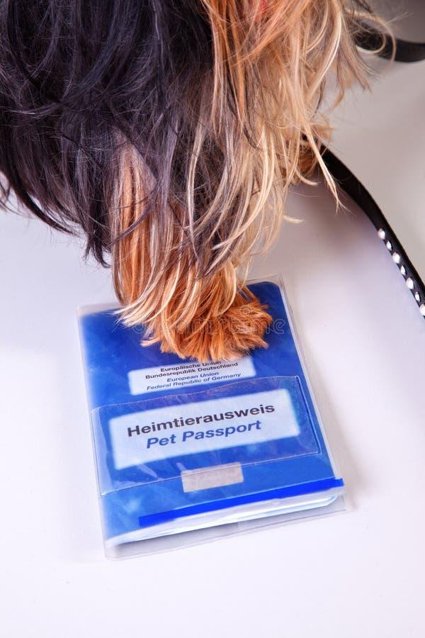 动物宠物护照 库存照片