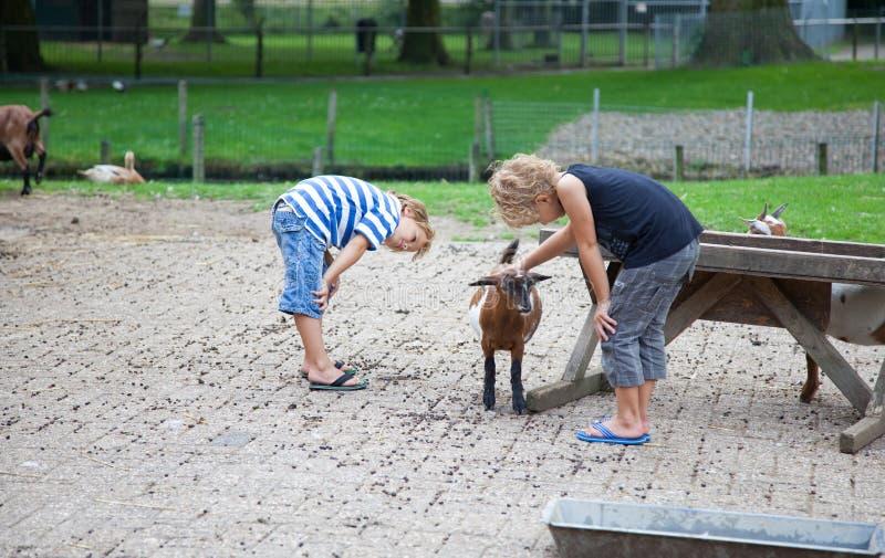 动物护养 免版税库存照片