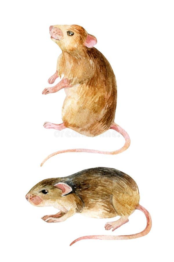 动物收集逗人喜爱的例证查出的鼠标宠物集 两只水彩老鼠 库存例证