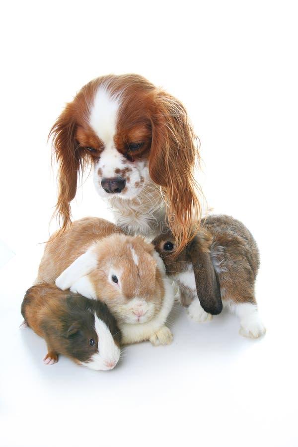 动物朋友 真实的宠物朋友 狗兔子兔宝宝在被隔绝的白色演播室背景一起砍动物 宠物爱 库存图片