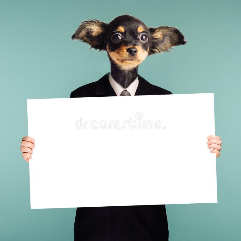动物权力概念 结合商人和狗头的拼贴画 字符在蓝色背景在他的站立并且举行 库存照片