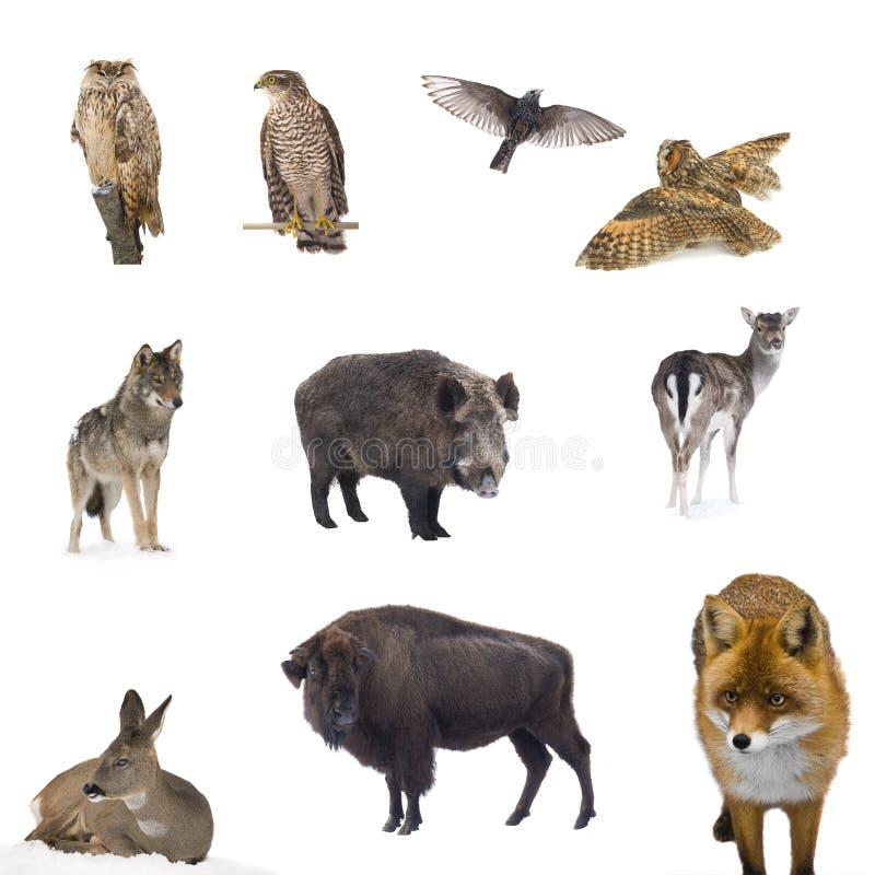 动物森林 免版税库存照片