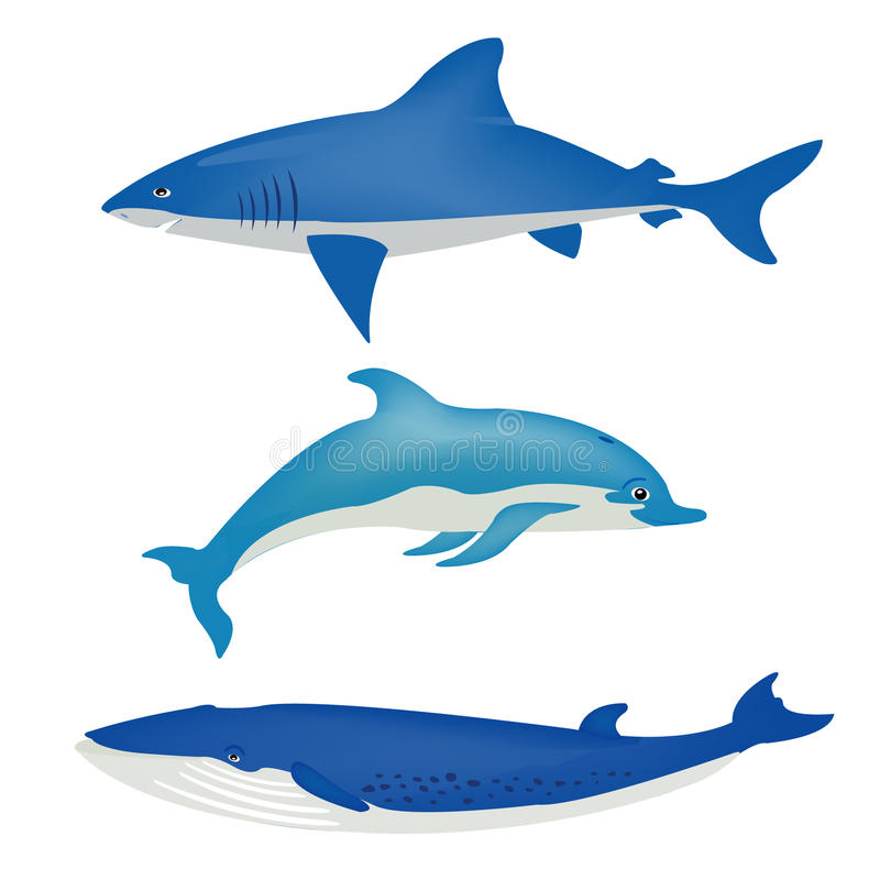 动物海运白色 向量例证