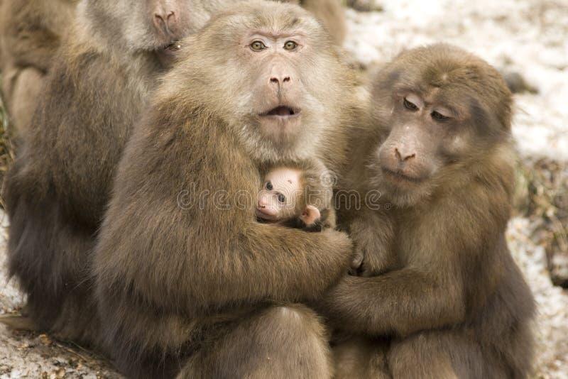 动物爱 免版税库存图片