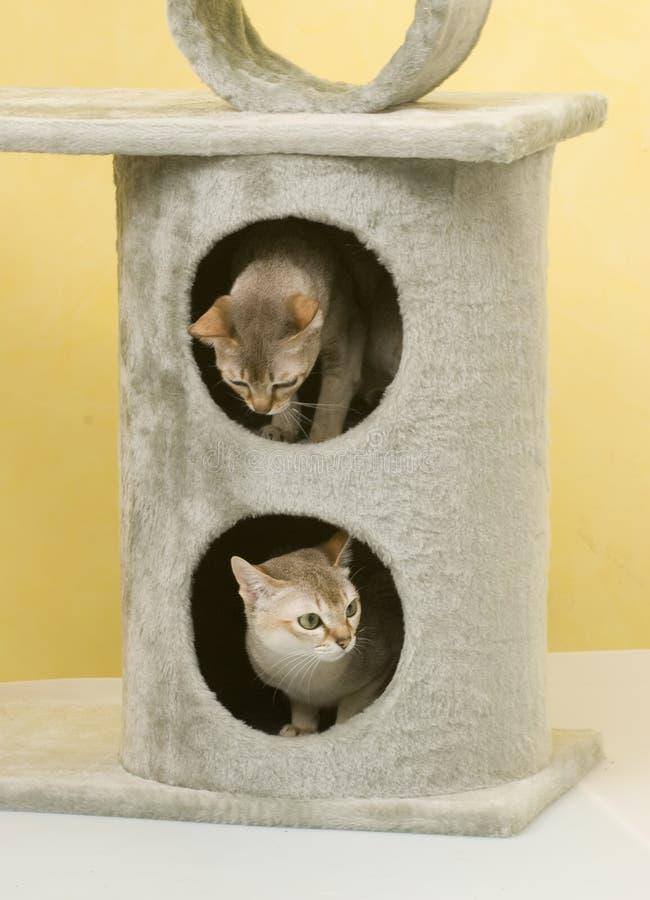 动物猫宠物 图库摄影
