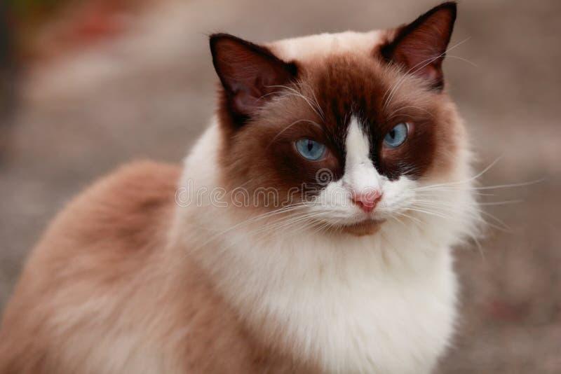 动物猫 免版税库存图片