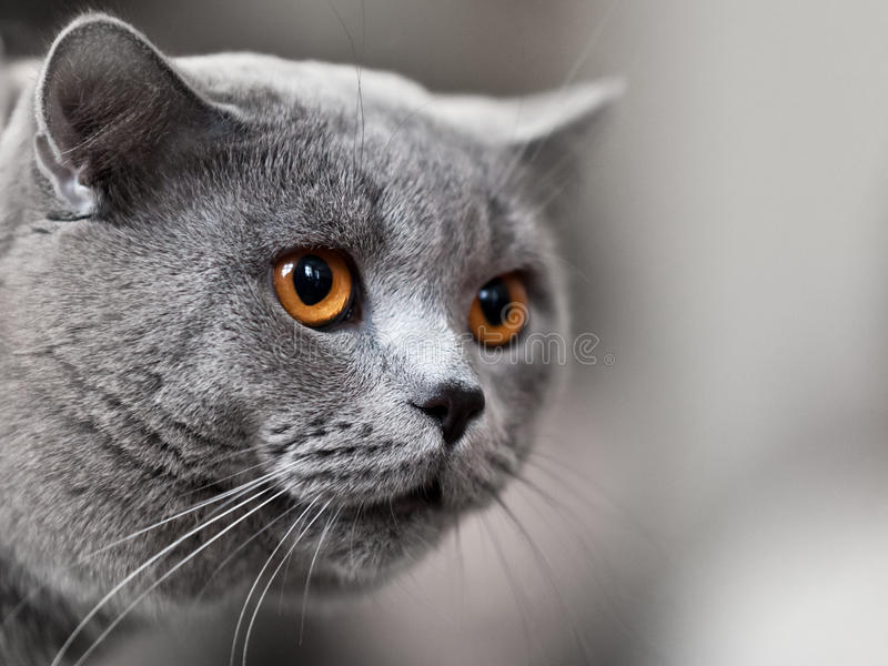 动物猫 免版税库存照片